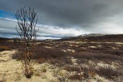 Dovrefjell–Sunndalsfjella National Park Royalty Free Stock Image