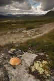 Dovrefjell-red stone. The Dovrefjel - Sunndalsfjella National park is in the norwegian national mountains Royalty Free Stock Photos