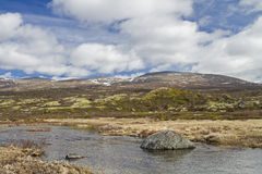 In Dovrefjell Stock Photography