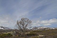 Dovrefjell Stock Image