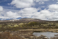 In Dovrefjell Royalty Free Stock Images