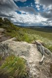 Dovrefjell track. The Dovrefjel - Sunndalsfjella National park is a norwegian national mountains Royalty Free Stock Photo