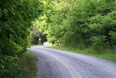 Down a Backroad. A quiet gavel backroad winding through the forest royalty free stock image