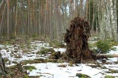 Down blown tree stock photos