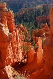 Down into Bryce. View down into Bryce Canyon National Park Utah Royalty Free Stock Photography