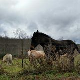 Down in the farm. Horse and mule on a mountain farm in Va Royalty Free Stock Photography