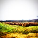 Down on the farm. Pasture and field in middle tennessee royalty free stock photo