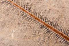Down feather detail Stock Photography