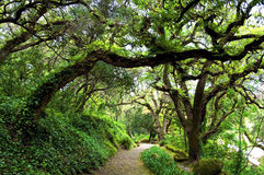 Down the garden path. Pathway through a forest of cork oaks Stock Photos