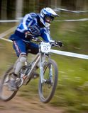 Down hill mtn bike racer. Competitive dh mtn biker racer pulling a wheelie with the finish line in sight Royalty Free Stock Image