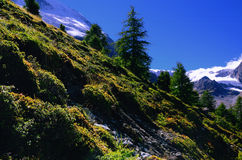 Down Hill in Swiss Alps stock image