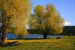 Down By The Lake 3. View from a lakeside park in Cascade Idaho Stock Image