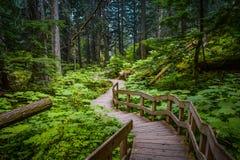 down path Στοκ Εικόνες