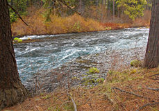 Down By the Riverside. Metolius River near Camp Sherman, OR stock images