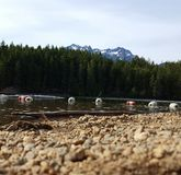 Down by the Shores at Lake Cushman Stock Images