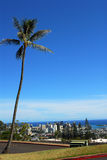 Down Town Honolulu. A view of down town Honolulu from Kamehameha School with a palm tree Royalty Free Stock Images