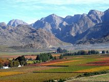Down in the valley. A look into the Hex valley of colourful vineyards at early fall time, South Africa Stock Photography