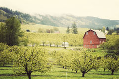A Red Barn Down in the Valley. A foggy day in Hood River, Oregon Royalty Free Stock Photo