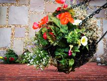 Down-view of a hanging basket full of plants stock photos