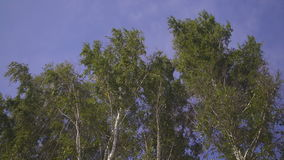 Down view on trees crowns bended with strong wind. stock video footage