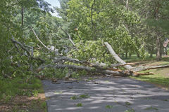Downed Tree Blocks Road Stock Photo