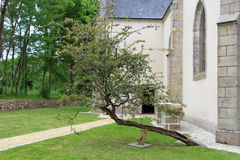 Downed tree in front of Plas Kaer chapel in Crach Royalty Free Stock Photography