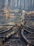 Downed Tree in a Charred Forest after Controlled Burn stock photos