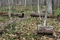 A pathway through a wooded area. Downed tree in a wooded area of Wisconsin in spring with a section of log removed to clear the path.  The section is rolled from royalty free stock photo