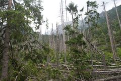 Downed trees  in High Tatras Stock Photos