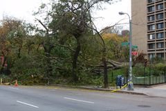 Downed Trees in NYC after Hurricane Sandy Stock Images