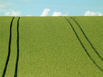 Downhill. Crop field with tractor tracks Royalty Free Stock Photo