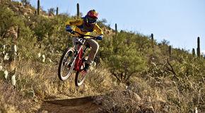 Downhill bike rider  riding down the trail Stock Images