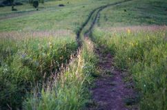 Downhill country dirt road winding in tall grass in Altai Mountains, Kazakhstan, at dusk.  Stock Photo