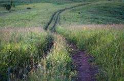 Downhill country dirt road winding in tall grass in Altai Mountains, Kazakhstan, at dusk.  Royalty Free Stock Photography