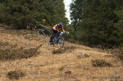 Downhill in forest. Mountain biker downhill in forest Royalty Free Stock Image