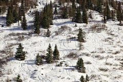 Downhill ski Stock Photos