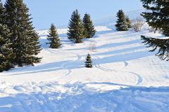 Downhill skiing tracks in snow forest Stock Images