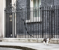 10 Downing Street Chief Mouser cat Stock Images