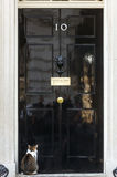 10 Downing Street Chief Mouser cat Royalty Free Stock Photography