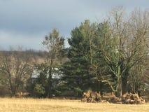 Downingtown Pennsylvania. Beautiful Country Side Pennsylvania Royalty Free Stock Photography
