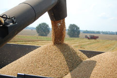 Downloading wheat stock photo