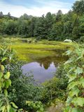 Downriver. Swamp in Maine near Dover-Foxcroft royalty free stock photos