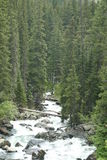 Downriver Cascade Falls. Cascade Falls rushes into the dense pine and fir forest Royalty Free Stock Photo