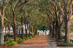 Downtown Charleston SC Waterfront Park Stock Image