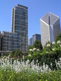 Downtown chicago from Millenium Park Royalty Free Stock Image
