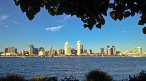 Downtown City Skyline framed by trees Royalty Free Stock Images