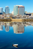 Downtown and Cormorant Royalty Free Stock Photos