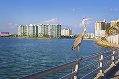 Downtown Gulf Coast Fish Master Stock Photo