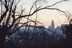 Downtown Los Angeles skyline as seen from Elysian Park. Buildings in downtown L.A. as seen through tree branches in Elysian Park with a focus on historic Los royalty free stock photos