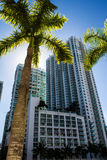 Downtown of Miami Royalty Free Stock Image